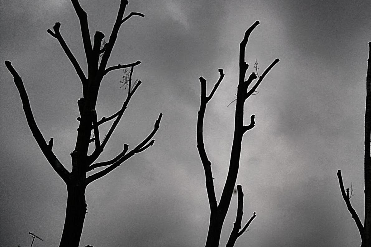 Gegen das Kappen von Bäumen