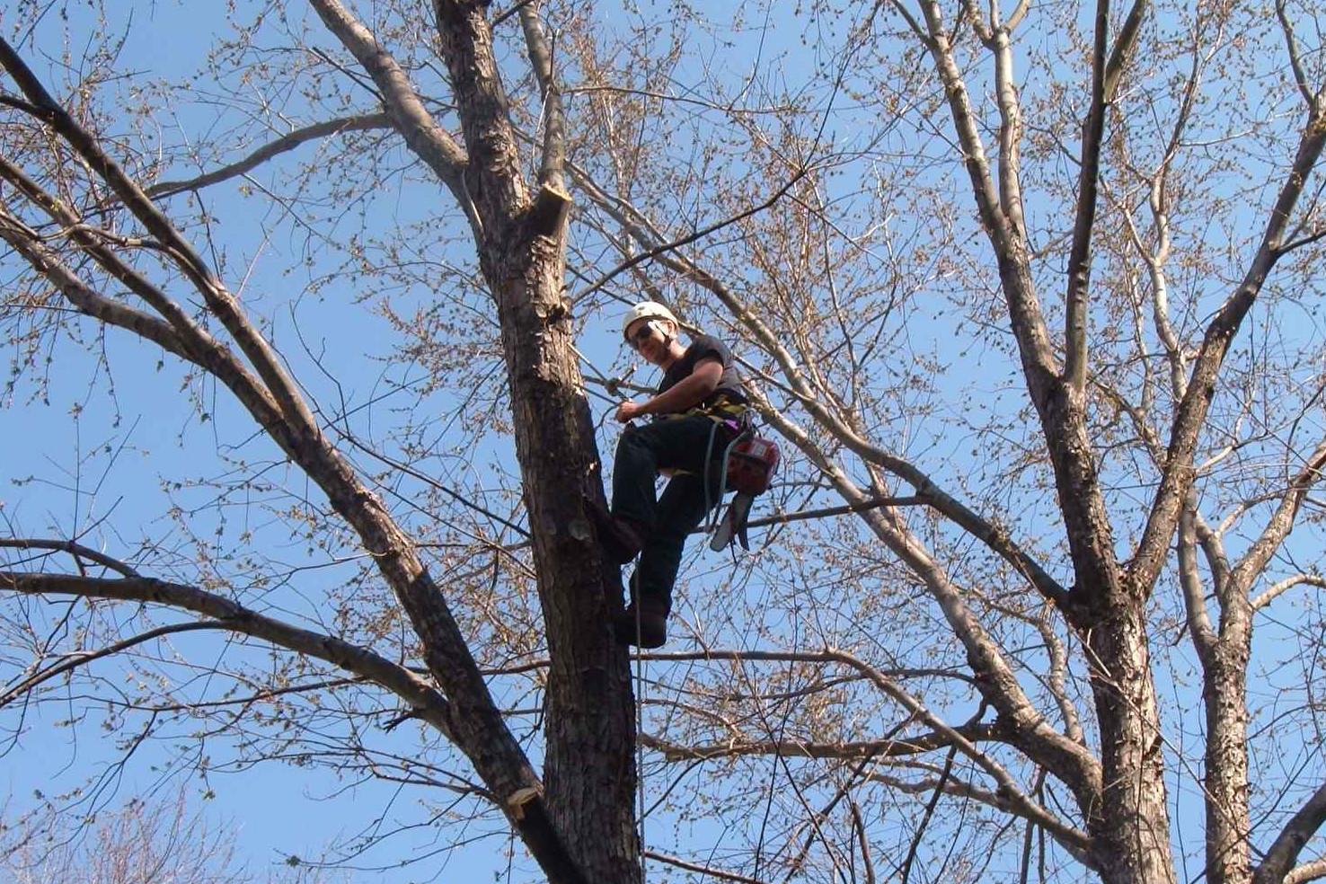 Baumpfleger finden