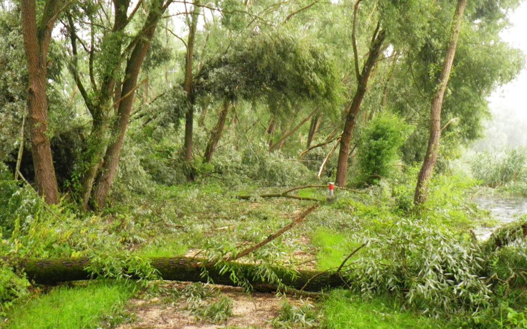 Bäume bei Sturm
