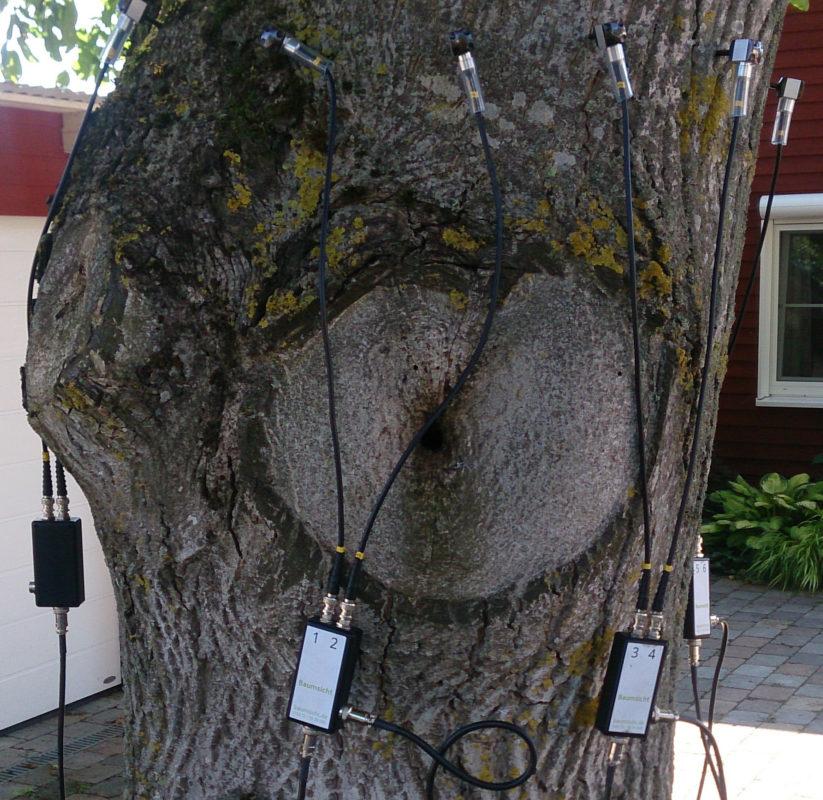 Baumuntersuchung: Astungswunden und Sensoren