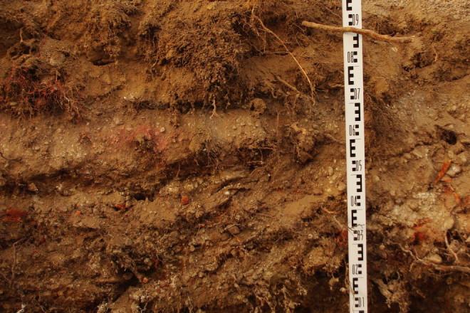 Baumgutachten Wurzelschaden