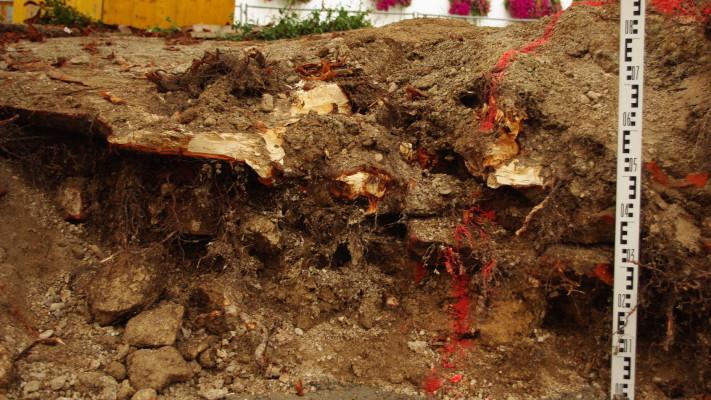 Wurzelschäden, Baumgutachten