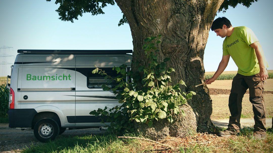 Baumsicht Baumkontrolle