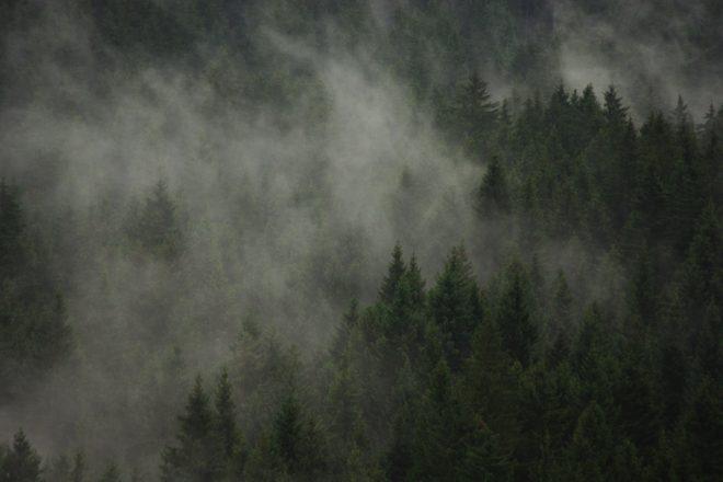Fichtenwald in den Bergen