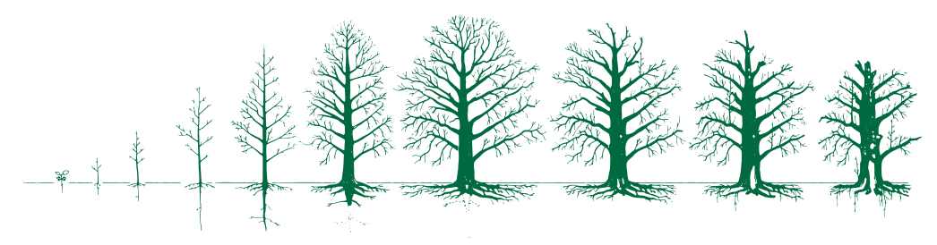 Gratis-E-Book: Trees –  a Lifespan Approach