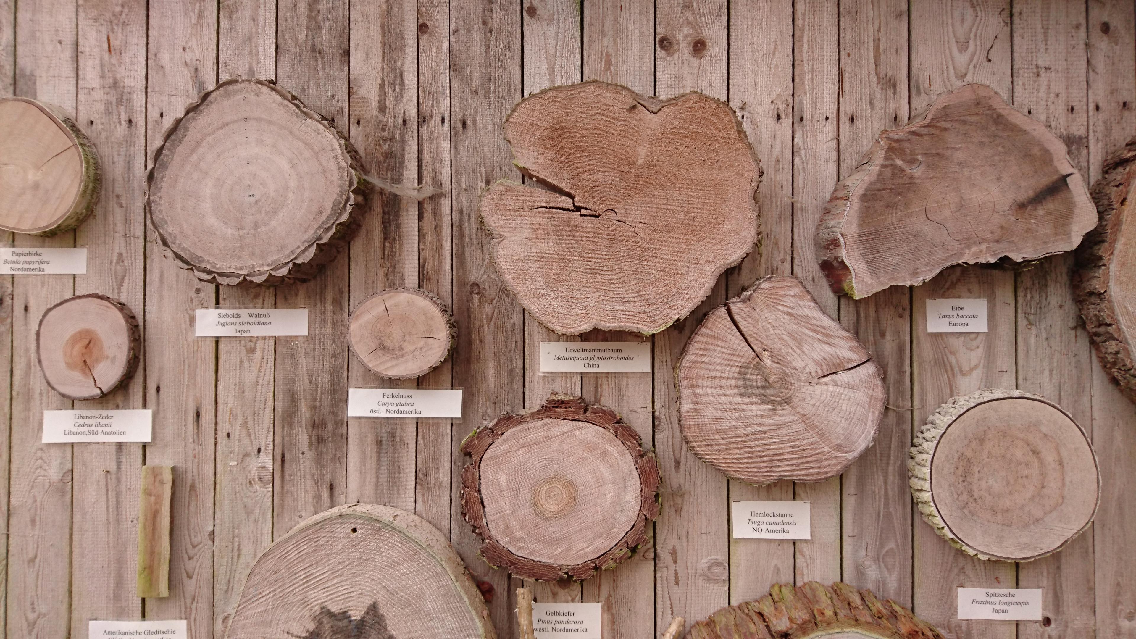 Stammquerschnitte von unterschiedlichen Bäumen an einer Holzwand