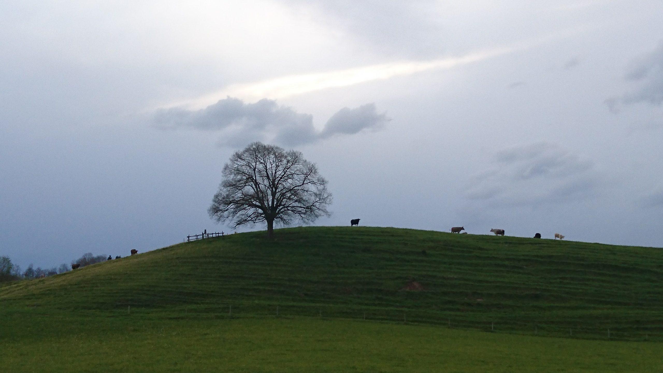 Baumwettbewerb im Oberallgäu