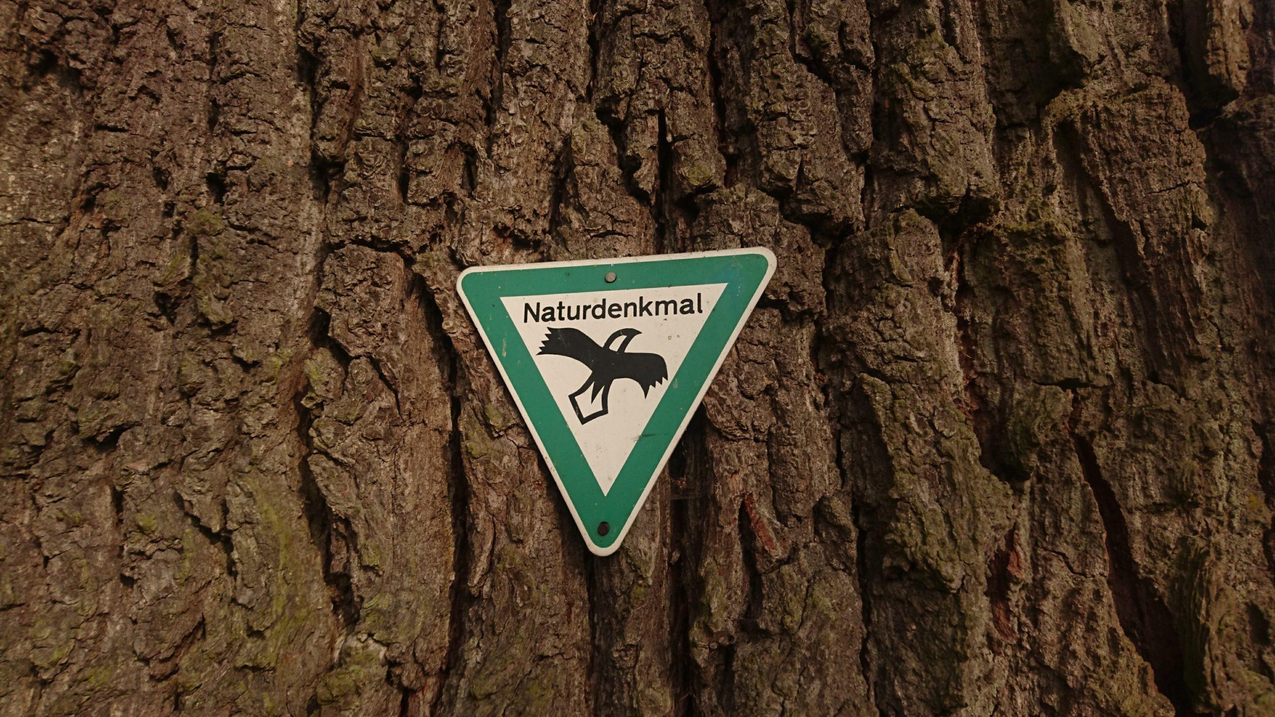 Baumkontrolle Naturdenkmale