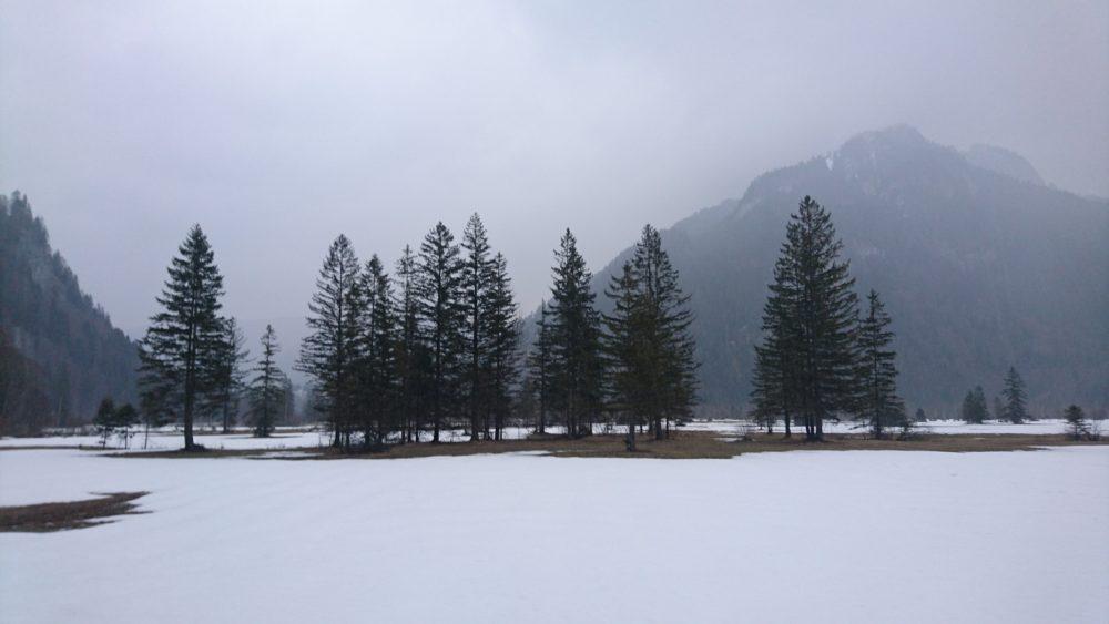 Baumkontrolle bei Schnee