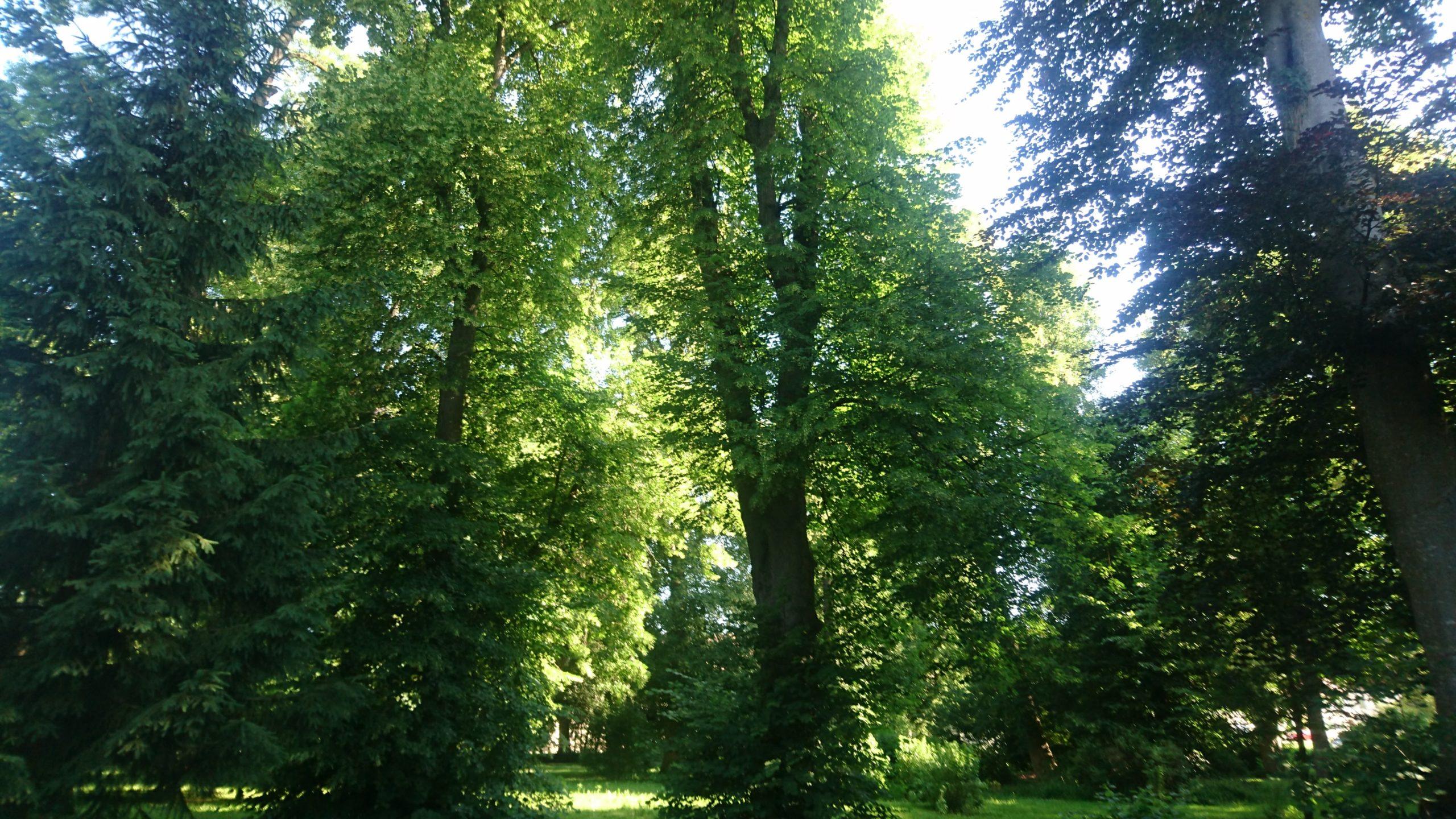 Baumkataster Parkanlage
