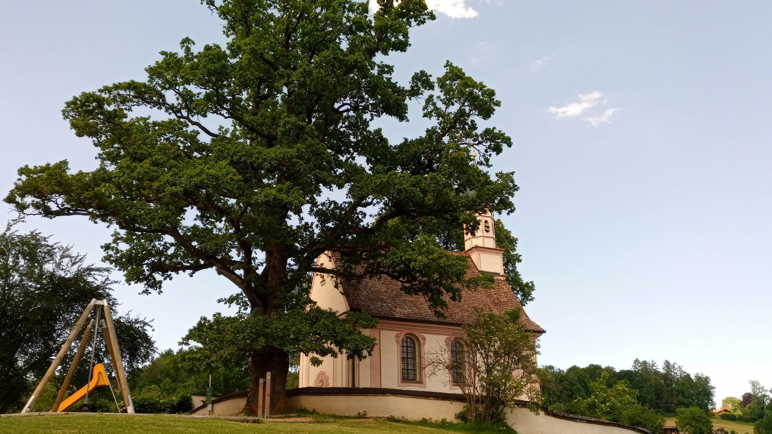 Baumkataster Kirchenstiftungen